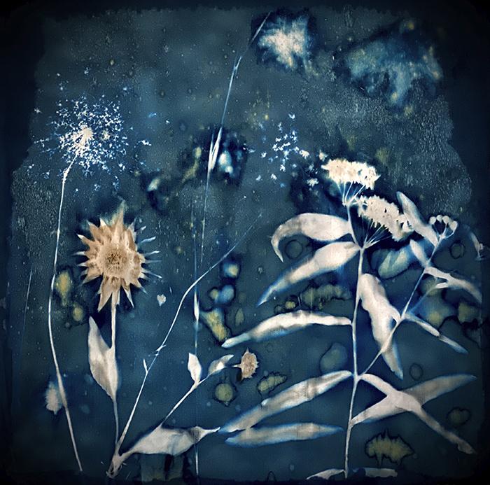 Fruma-Markowitz-United-States-Something-Wild-and-Wonderful