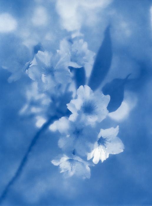 Graham-Zimmermann-England-Blossom