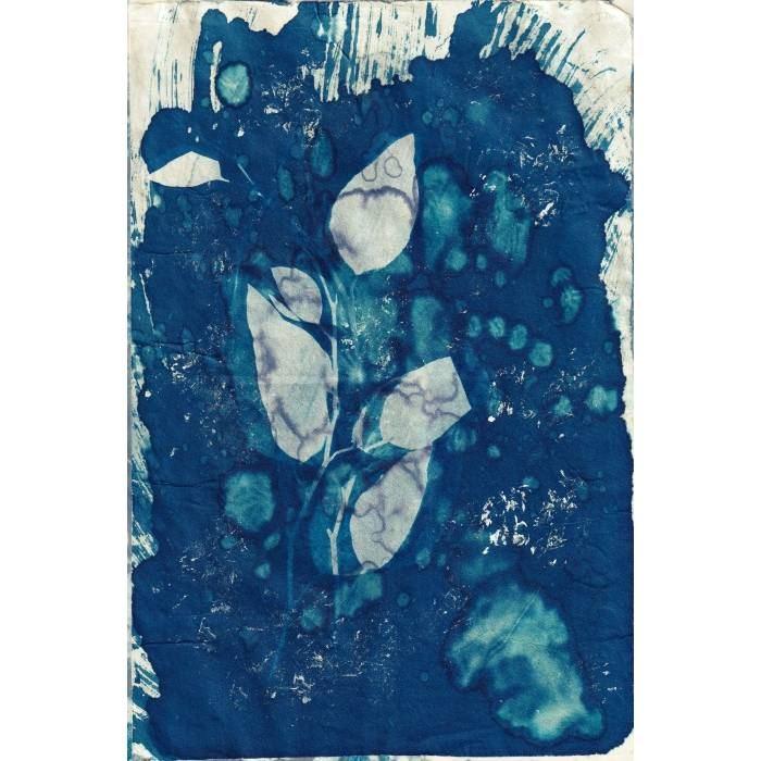 Jennifer-Martinus-Australia-Botanic-Splash