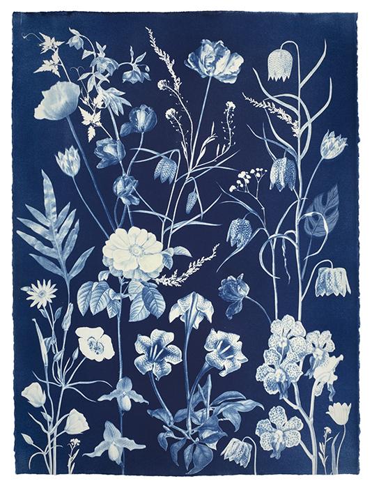 Julia-Whitney-Barnes-USA-Roses-Orchids-Fritallaria-Tulips-etc