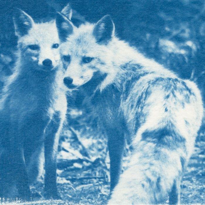 Katsuhiko-Inagaki-Japan-Foxes