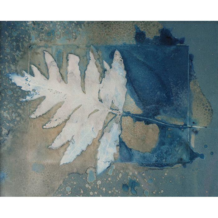 Loren-Williams-Canada-Sensitive-Fern
