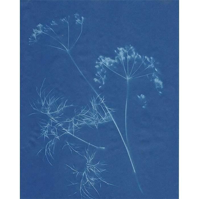 Moyra-Cuthill-UK-Seedheads