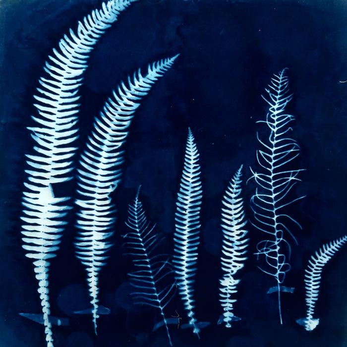 Sally-Stone-UK-Seven-Ferns