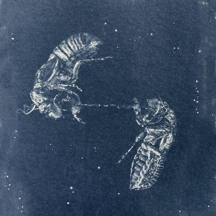 Smita-Parida-USA-Cicadas-in-Space