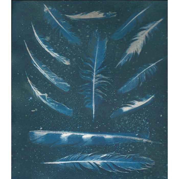 Trish-Burns-USA-Feathers