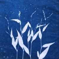 Cathy-Comstock-USA-Seeds