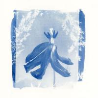Hiske-Dooper-Netherlands-Perky-Tulip