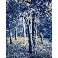 Tadeusz-Marx-Poland-Yew-tree