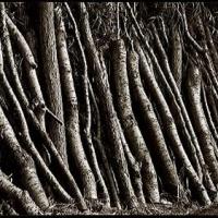 Argyrotype Cut logs