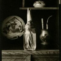Kallitype toned w platinum Bulb in jar