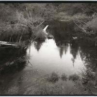 Salt print Black Hills Pond 1989