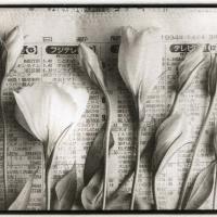 Salt print Flowers for Flora 1994