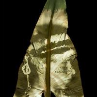 Chlorophyll-print-ACHUAR-warrior-Ecuador-Calla-Lily-leaf