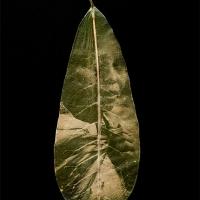 Chlorophyll-print-Aymara-young-women-Bolivia-Croto-leaf
