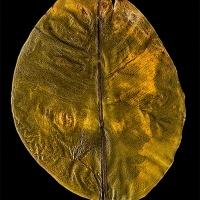 Chlorophyll-print-Quichua-Women-ECUADOR-Rubber-Tree-leaf