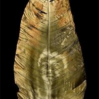 Chlorophyll-print-SHUAR-WARRIOR-ECUADOR-Anthurium-leaf