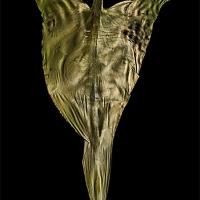 Chlorophyll-print-Tzeltal-women-Chiapas-Mexico-Calla-Lily-leaf