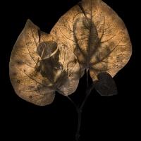 Chlorophyll-print-Waorani-sisters-Ecuador-YALOMAN-LEAF