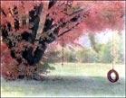 Handcolored, Shade. Kodak HIE, 35mm film.
