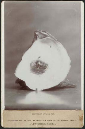 Maine Oyster and Pearl, Bromide print 1895 (Collection of Richard and Christine Rydell)