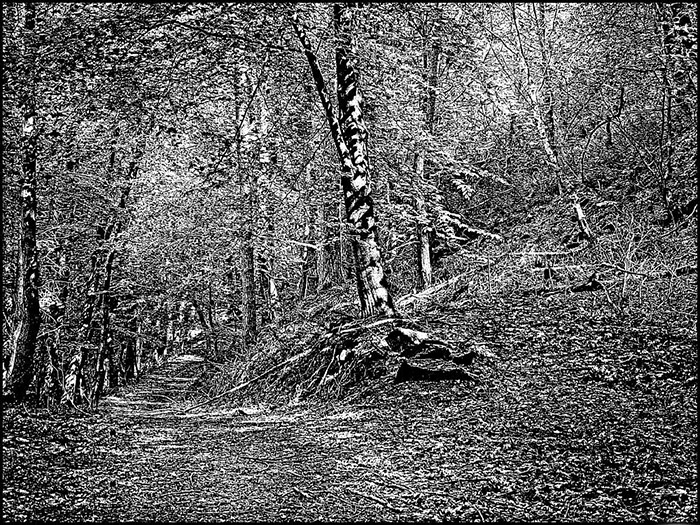 Jim Read's image forest path