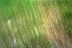 Green, pinhole by Maximillain