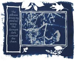 Cyanotype by Melissa Jolley
