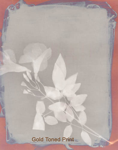 Lumen print by Marek Matusz