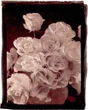 Figure 4: Platinum Seeded Satista Print