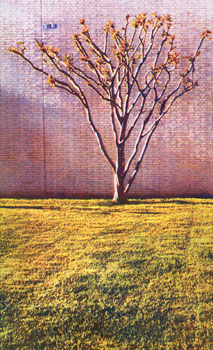 Tree, 2008 © Casein Pigment Print