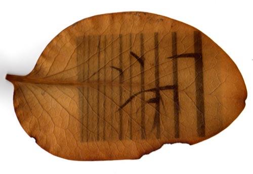 chlorophyll print on a leaf