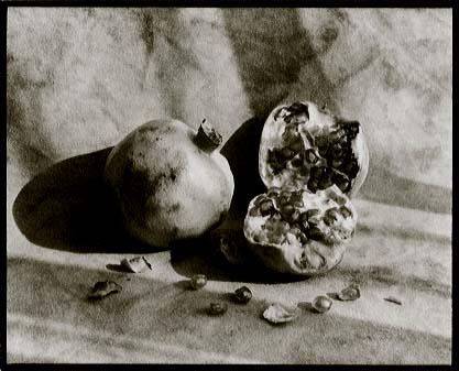 """Vandyke print: """"Weston's Pomegranates, Yotsukaido, Chiba"""