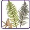 Auers nature prints