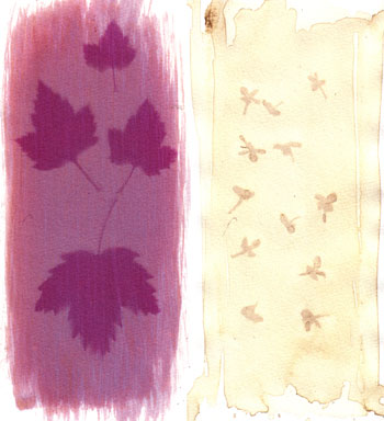 Anthotype emulsion from black currant and lilacs
