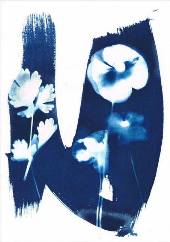 Cyanotype by Mary Monckton