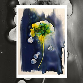 Bea Estevez Cyanotype