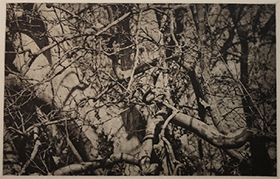 Copperplate photogravure by Hervé Sachy