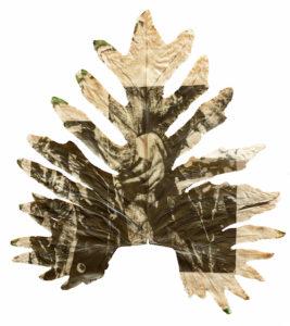 Chlorophyll prigment print by Almundena Romero