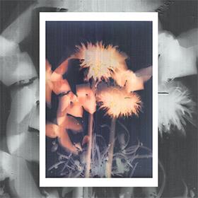 Lumen print by Nóra Fanni Zentay