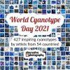 Cyanotype day 2021 - 427 cyanotypes